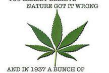 Politics of Prohibition