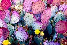 Kakteen und Sukkulenten / Kakteen Pflanzen, Kaktus in der Wohnung, wohnungspflanzen, Kakteen, Sukkulenten, dekorieren mit Sukkulenten, Ideen mit Sukkulenten und Kakteen