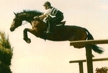 Horses / I want to get back into horses in oz, eventing jumping , anything g fast and high :)