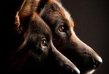 fotky pes