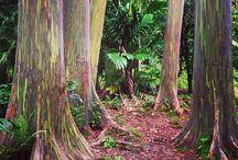 Maui trip / by Cee Cee Wieber