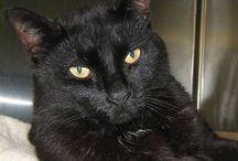 Cats for Adoption / purr, purr