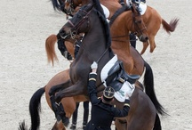 Horses / L'air du paradis est celui qui souffle entre les oreilles d'un cheval.