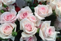 Fleurs de saison : Mai / Les fleurs par saison chez Pompon , le joli mois de mai / The flowers that You can find in may at BoutiquePompon