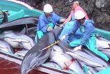 Japan - Stop killing Dolphins/Whales