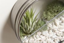 plants and home decor / by Jonah Block