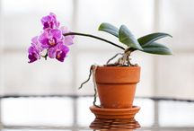 Orchid Tips and Tricks