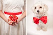 Red Weddings / Wedding inspiration
