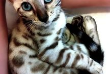 Kitties, puppies, and all things cute!