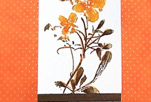 Distress Ink cards / by Paula Touhey