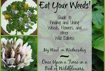Gardening: Weeds / by Eric Larson