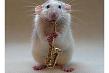 MUSIC!! / by Sue Epstein