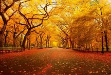 """Autumn Radiance / """"Autumn is a second spring when every leaf is a flower.""""  ― Albert Camus"""