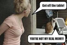 Cat Funnies / Hilariously funny / by Tammy Seymour