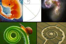 spirals of life