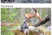 Außergewöhnliche Freundschaft