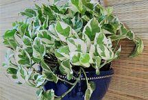 plantas purificadoras de aire.