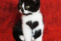 Kitties / Meoooow