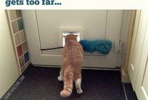 Hilarious pets