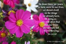 Quotes / by Sharon Petersen Butterfield