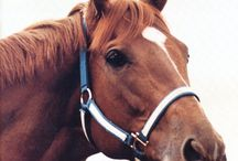 Nobility  / Love horses--all animals, but especially horses.  Some have played unique parts in my life--from Smokey losing the Great Pony Race to the immortal Secretariat, whose Belmont was the first tv event my husband and I watched together...