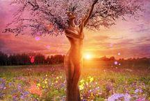 Sacred Trees