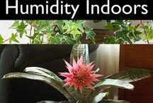 Plants That Reduce Indoor Humidity