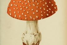 Disegni di Funghi