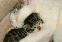 Cats world