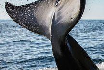 Hvaler / Alle levende og strandede
