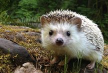 Montessori Nature: animals