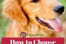Diätfutter / Futter für Hunde, die zu Übergewicht neigen