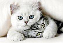 Black and White kitties