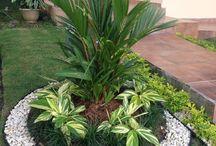 plantd