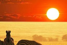 Africa / Inspiration: Traveling to Africa and going on safari.