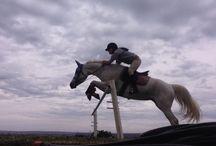 Horses jumping / Horses doing jumps