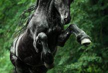 Horse Fan