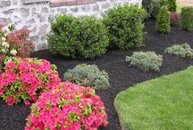 Landscaping / by Linda Salsone