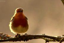 Birding / Photos of our favorite bird species