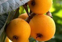 Frutas ameixas