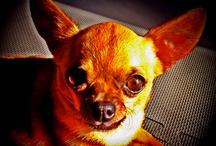 Friends of SMS (Dogs) / by Sean Charles @SocialMediaSean