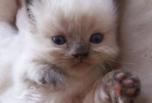 Cute Cat :* / All about cute cat