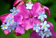 Floral / by Joyce Harding Thompson