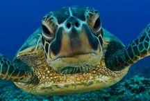 Marine Life / by Judy