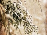 Winter ❄ / by Bobbi Long