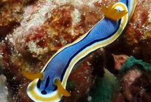 Grand Luley Manado Underwater Marine Life