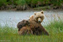 Protecting Critical Critter Habitat