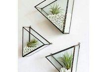 Home Decor-Plants