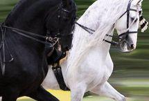 lovak  és  pónik