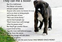 Boxers / by Allison Willemin